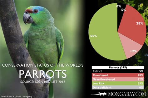 CHART: The world's most endangered parrots and allies