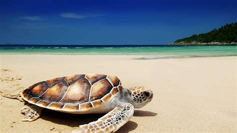Turtle Conservation Experience | Freiwilligenarbeit in
