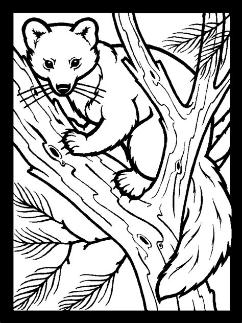 Printable Color Pinemartin Animals Coloring Pages