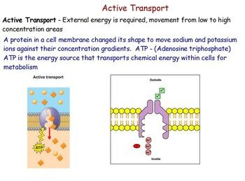 Cell Transport - Active and Passive Transport; Osmosis