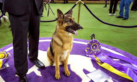 14 of the most expensive dog breeds   Newsday