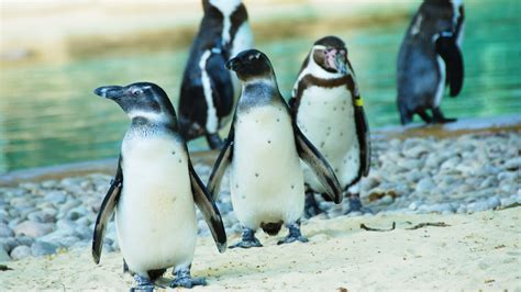 General Information for Group Visits   Zoological Society