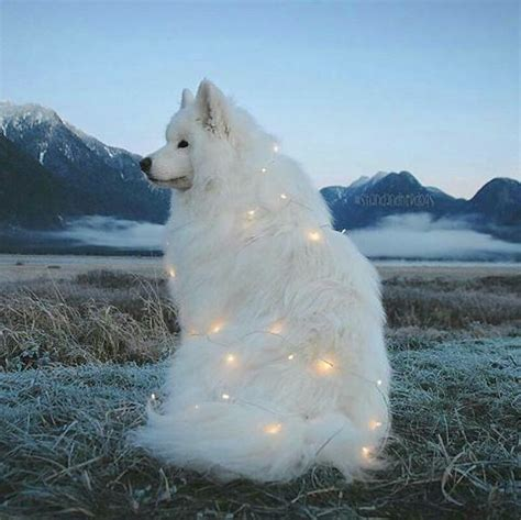 Beautiful Dog With Twinkle Lights Pictures, Photos, and