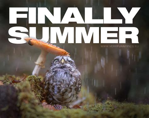 When the summer finally comes | Very Funny Pics