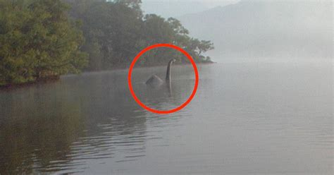 Is this the Loch Ness monster? Creature photographed in
