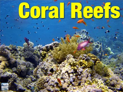 IGCSE Geography: Marine Processes: Coral Reefs