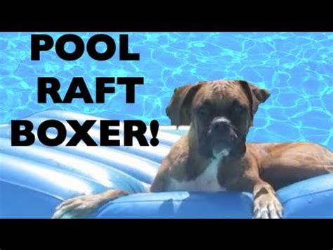 Boxer Dog Floating on a Pool Raft!! Brock the Boxer - YouTube