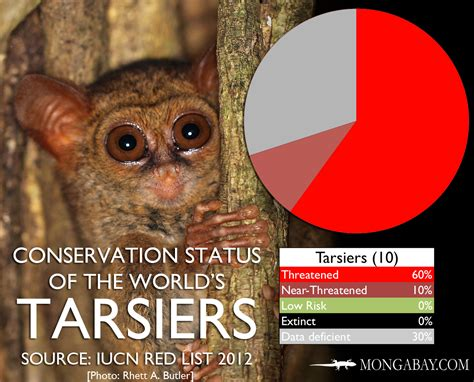 CHART: The world's most endangered tarsiers