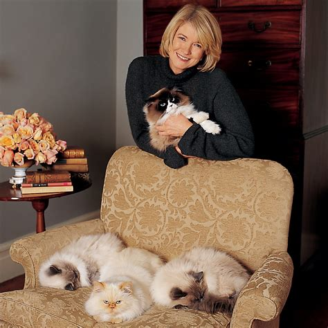 How to Remove Pet Hair from Upholstery | Martha Stewart